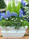 French_noveau_lacewing_garden_desig